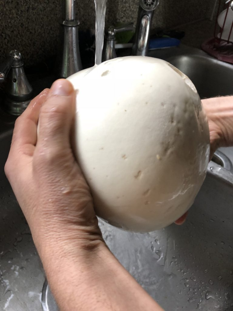 Wash the dirt off the giant puffball mushroom